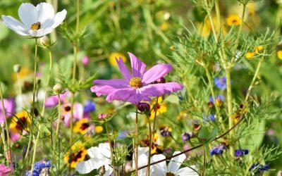 Tornerà l'estate e avrà i colori di un prato fiorito